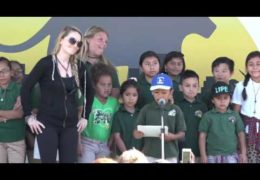 Nature:  National Wildlife Federation P-22 Griffith Park Arrival