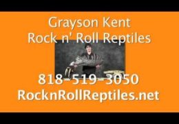 Grayson Kent and his Rock n Roll Reptiles